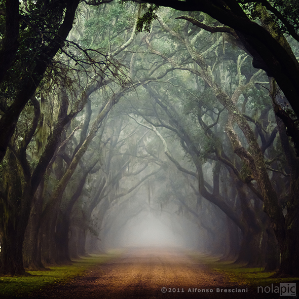 fog  scary street prints for sale louisiana live oaks foggy