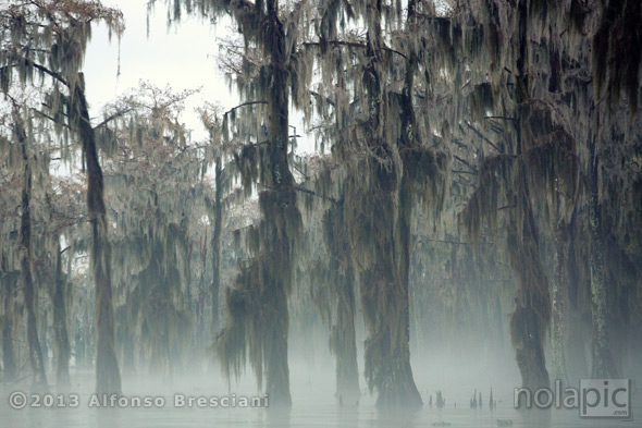 Swamp in the fog at sunrise